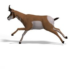 Free Antelope Stock Images - 9475984