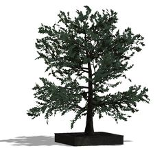3D Render Of A Needle Beam Tree Royalty Free Stock Photos