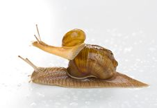 Free Snail Stock Photo - 9476630