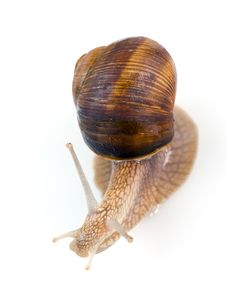 Free Snail Stock Image - 9476651