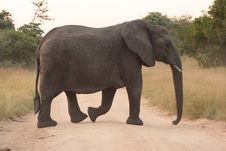Free Elephants In The Sabi Sands Private Game Reserve Stock Photo - 9477440