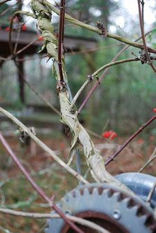 Vine Grows Up A Cable