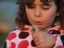 Free Little Dandelion Blower. Royalty Free Stock Image - 9477656