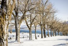 Free Wintertime Trees Stock Image - 9478551