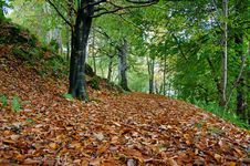 Free Autum Leaves Royalty Free Stock Photo - 9479605