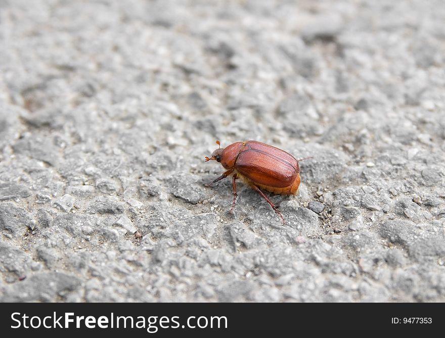 Bug on tarmac