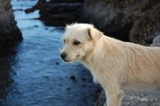 Free Close-up Of Wet Dog By Lake Stock Photography - 94706572