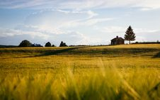 Free Golden Hay Field In Countryside Royalty Free Stock Images - 94708779