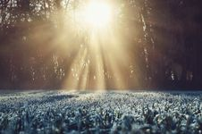 Free Frosty Grass On A Sunny Morning Stock Images - 94711464