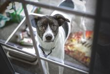 Free Dog Looking Through Window Stock Photo - 94789550