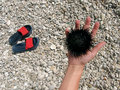 Free Stone Beach, Slip-on Shoes Hand And Sea Urchin Royalty Free Stock Photos - 9481628