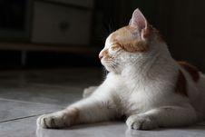 Free Cat Sleeping Stock Photo - 9482660