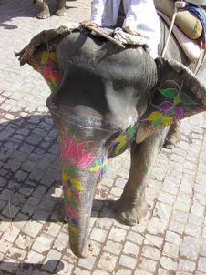 Free Elephant Ride Stock Photos - 9484013