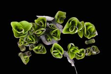 Free Young Green Shoots Of Tulips Royalty Free Stock Photos - 9484568