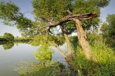 Free Tree Over The Lake Stock Photography - 9486082