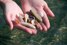 Free Two Hands With Seashell Stock Photos - 9486293