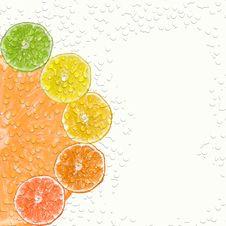 Citrus Fruits Stock Image