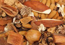 Free Seeds Stock Photos - 9487393