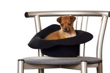 Free Little Dog In The Hat Stock Photography - 9487482