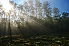 Free Sunlight Piercing Through Green Tall Trees During Daytime Royalty Free Stock Photography - 94886857