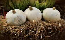 Free White Round Vegetable Piled On Hay Near Green Leaf Plant Stock Image - 94886871