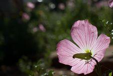 Free Flower Semaphore Stock Image - 94887221