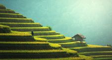 Free Rice Terraces, China Royalty Free Stock Photos - 94887288