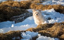 Free Dog Sitting In Snowy Hay Field Royalty Free Stock Photo - 94887335