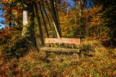 Free Bench In The Woods Royalty Free Stock Photography - 94887347