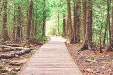 Free Wooden Walkway Through Forest Royalty Free Stock Images - 94887459