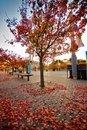 Free Autumn Day Royalty Free Stock Photo - 9494655
