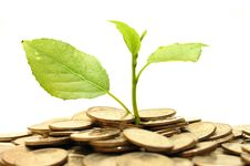Free Coins And Plant, Isolated On White Background Stock Photos - 9490383
