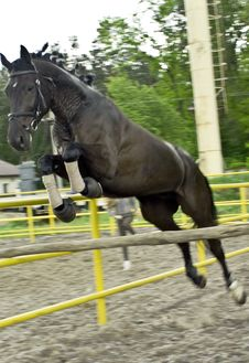 Free Jump A Horse Royalty Free Stock Photo - 9490735