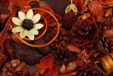 Free Still-life Royalty Free Stock Images - 9494519