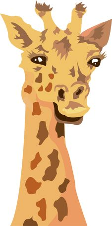 Free Giraffe Stock Photos - 9495063