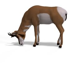 Free Antelope Stock Images - 9496154