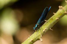Free Dragonfly - Libellula 300dpi Royalty Free Stock Photo - 9497965