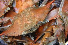 Seasoned Steamed Crabs Royalty Free Stock Photos