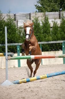 Free Brown Horse Stock Photography - 9498872