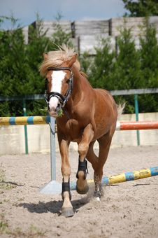 Free Brown Horse Stock Image - 9498881