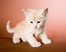 Free Cute Kitten Royalty Free Stock Photo - 9499645