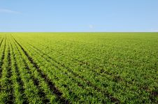 Free Blue Sky And Green Field Stock Photos - 9499793