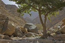 Free Mountain Tree Royalty Free Stock Photo - 94945335