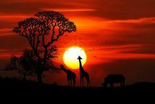 Free Sunset In African Safari Park Stock Photos - 94983843