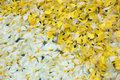 Free Yellow And White Petals Royalty Free Stock Photo - 950135