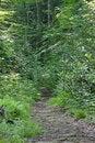 Free Woodland Path Stock Photo - 953870