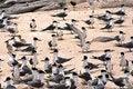 Free Birds On Beach Royalty Free Stock Photos - 958328