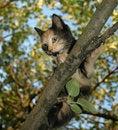 Free Kitten On The Tree Stock Photography - 959182