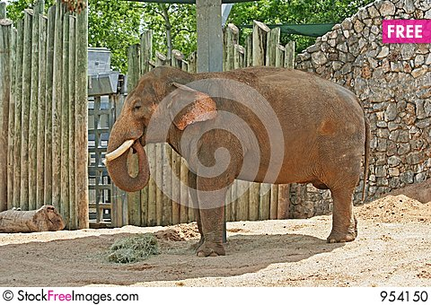 Free Adult Elephants Stock Photo - 954150