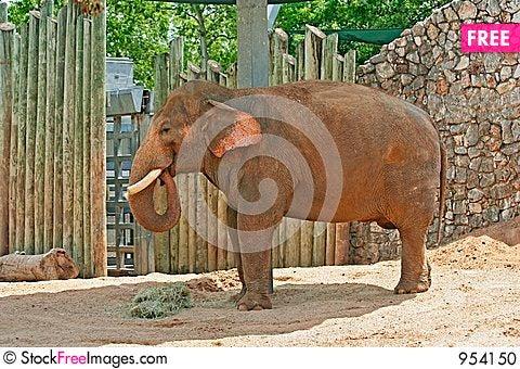 Free Adult Elephants Stock Photo - 954150